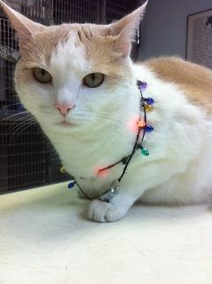cat wrapped in christmas lights