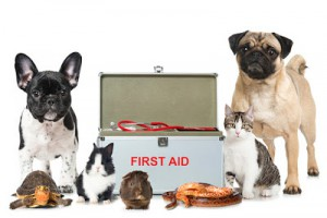 small pets next to first aid kit